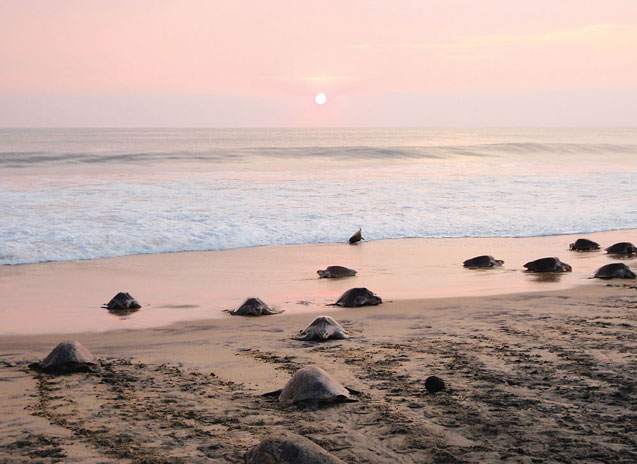 turtles-wildcoast-01