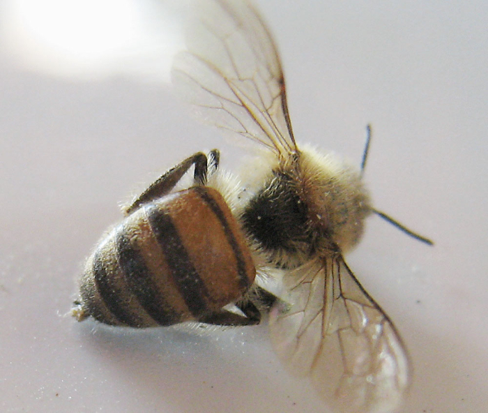 beesting-therapy-4
