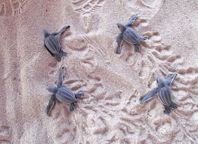 turtles-wildcoast-2